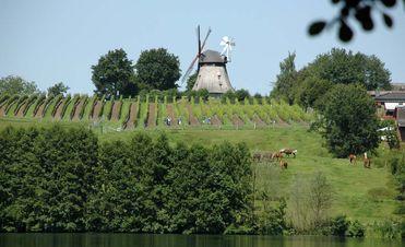 Grebiner Mühle & Weinhänge
